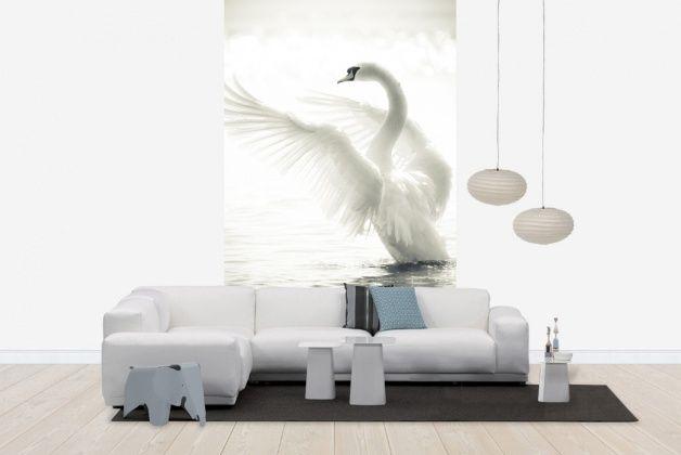 Graceful Swan - Tapetit / tapetti - Photowall