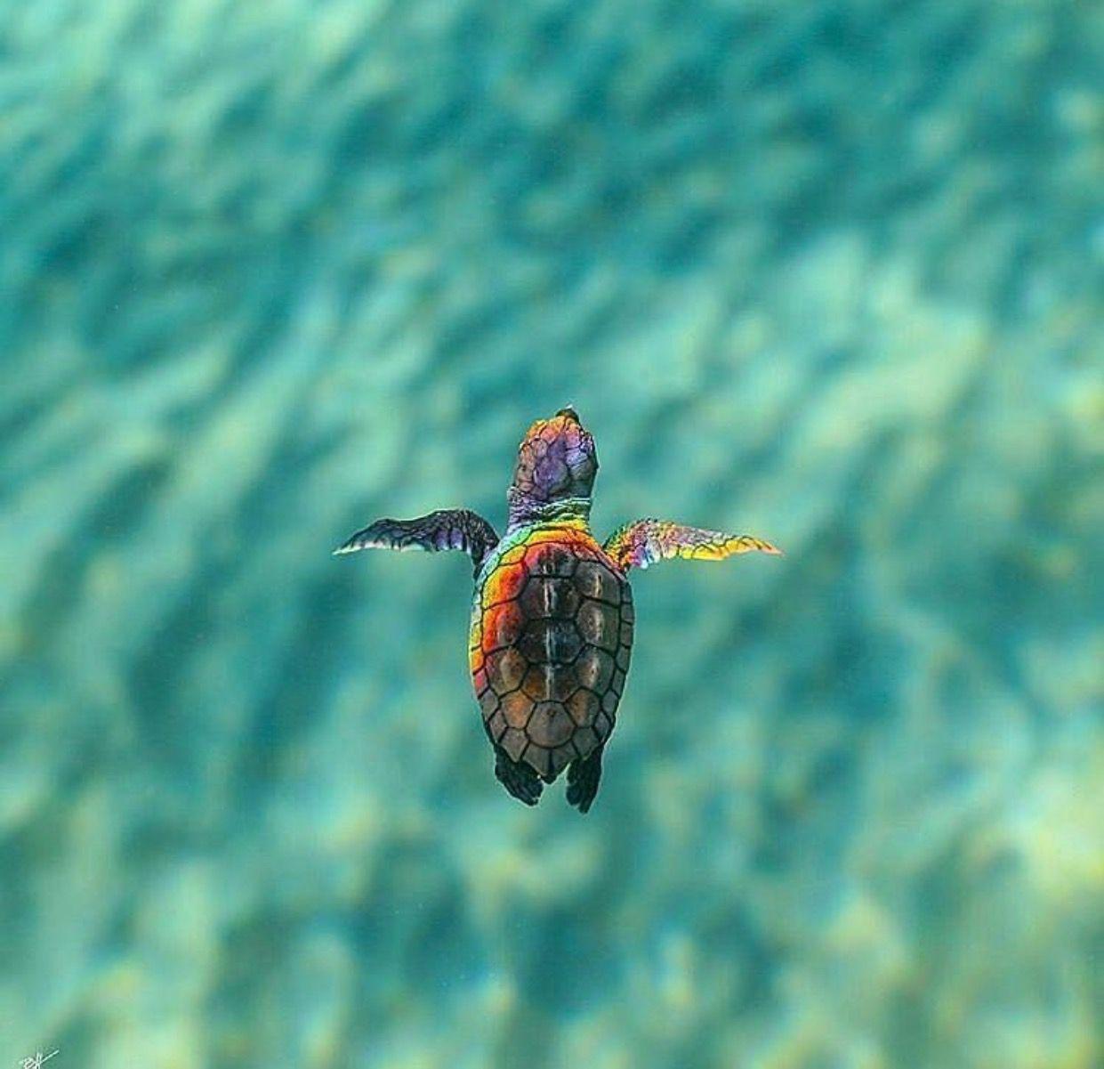 Nett Süsse Meeresschildkröte Färbung Seite Galerie - Beispiel ...