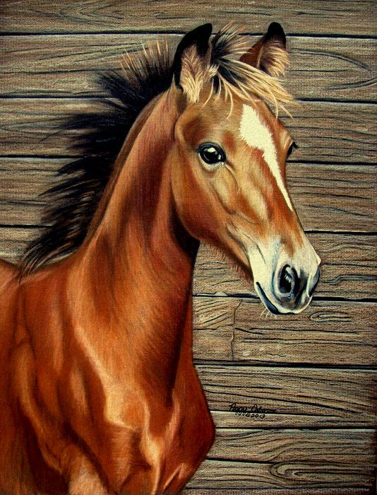 What A Doll By Anniecanjump On Deviantart Horses Cross Paintings Horse Painting