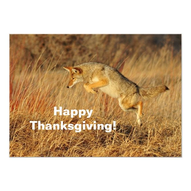 Jumping Coyote Thanksgiving Invitation Zazzle Com Coyote Facts