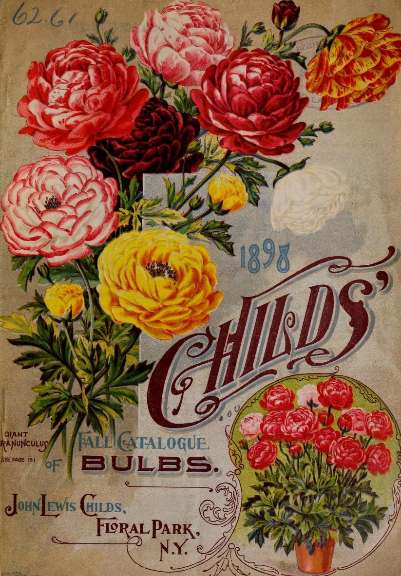 John Lewis Flowers John lewis childs seed company catalogue rare flowers vegetables john lewis childs seed company catalogue rare flowers vegetables fruits 1898 sisterspd