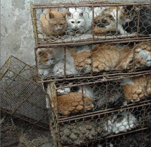 Fake Fur Made In China Is Not Fake Disgusting Dog Cat Cats