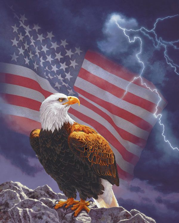 Thank You For Our Freedom Bald Eagle American Flag Eagle Eagle Pictures