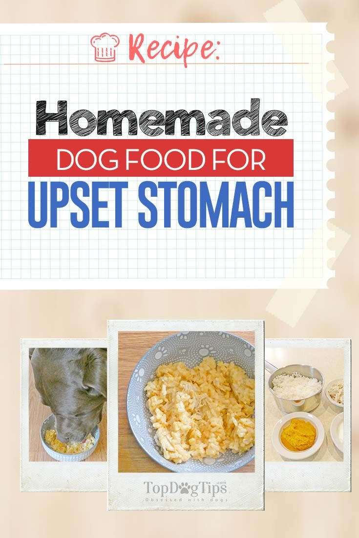 Recipe Homemade Dog Food For Upset Stomach Top Dog Tips Dog