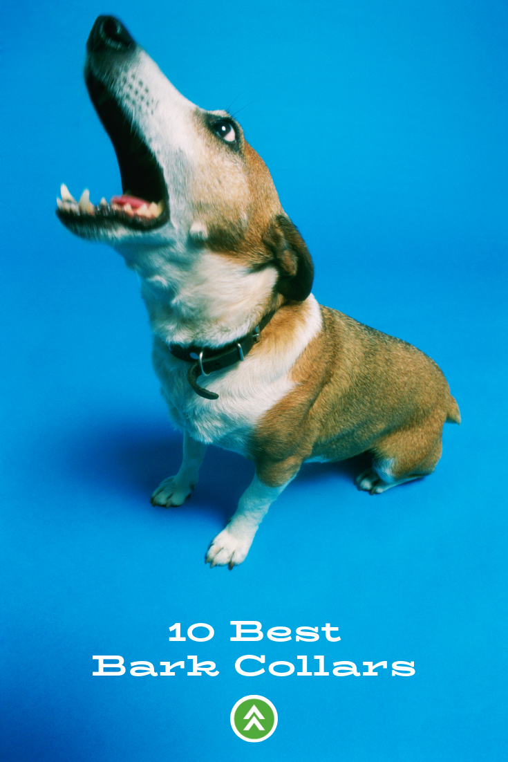 Top 10 Best Bark Collars Dog Barking Stop Dog Barking Dog