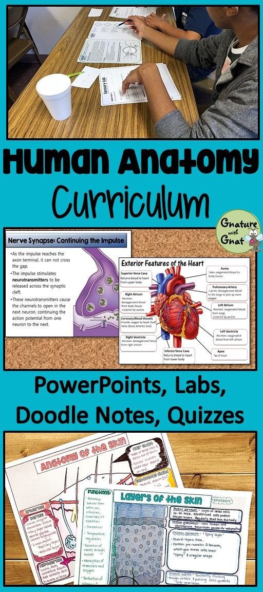 Anatomy & Physiology Curriculum: PowerPoints, Diagrams, Labs ...