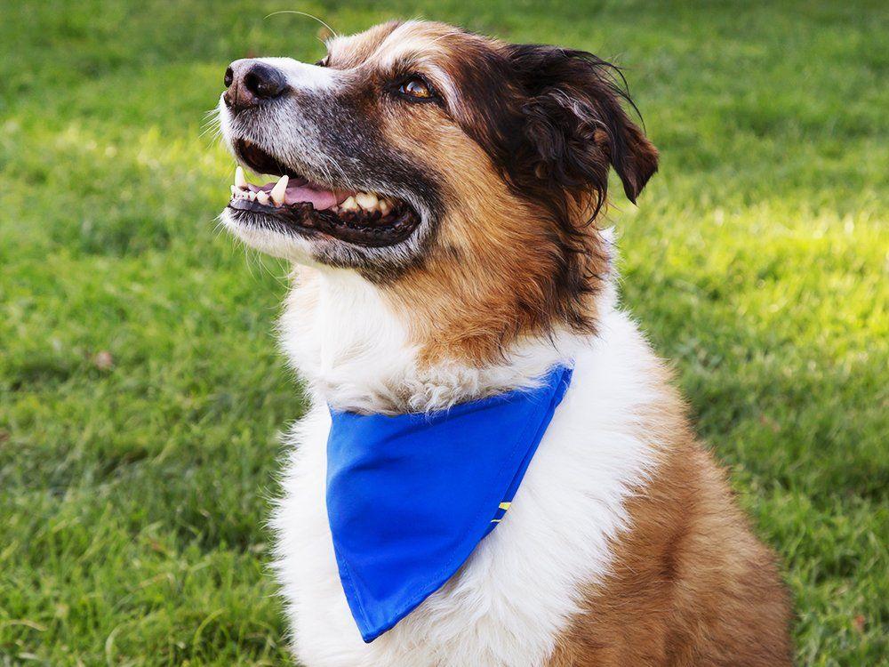 Dog Cooling Collar Bowl By Bandana Bowl In 2020 Dog Bowls
