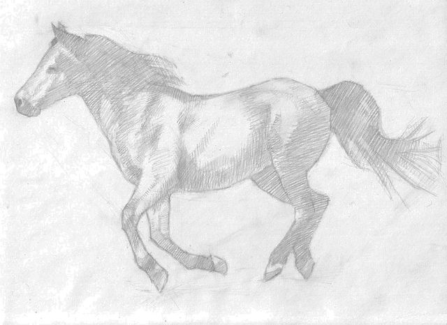 How To Sketch A Realistic Running Horse Horse Running Drawing