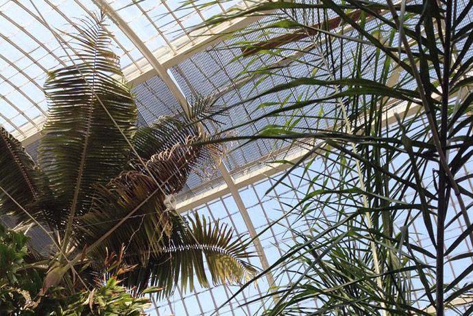 The palm house in Gothenburg