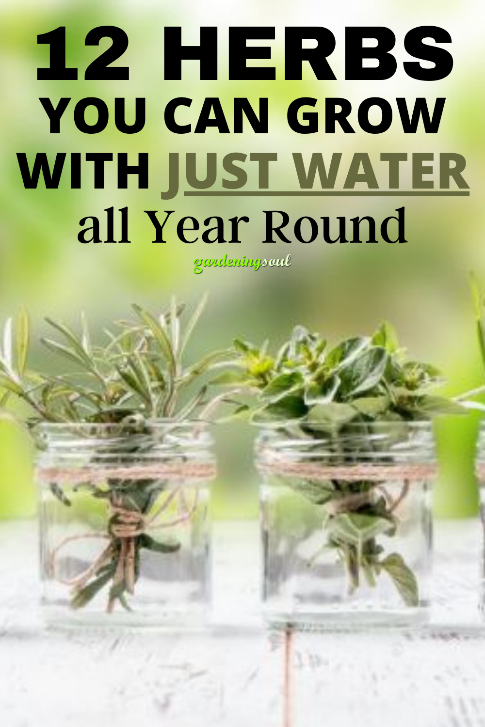 12 Herbs you Can Grow With Just Water all Year Rou
