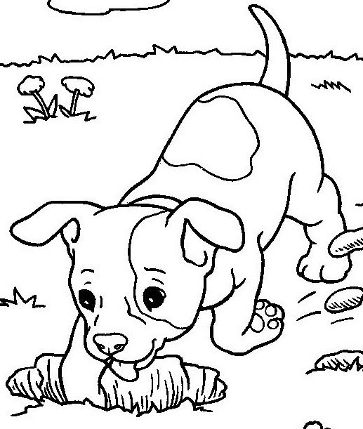 Abcs Of Dog Behavior D Is For Digging