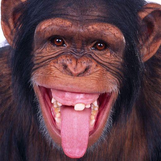 Idée par Dorothy sur Beautiful Animals | Photos singe ...