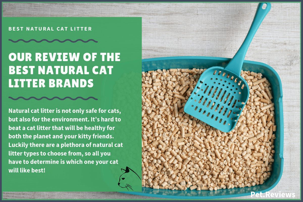 7 Best Natural Eco Friendly Cat Litters That Are Biodegradable In 2020 In 2020 With Images Natural Cat Litter Cat Litter Natural Cat