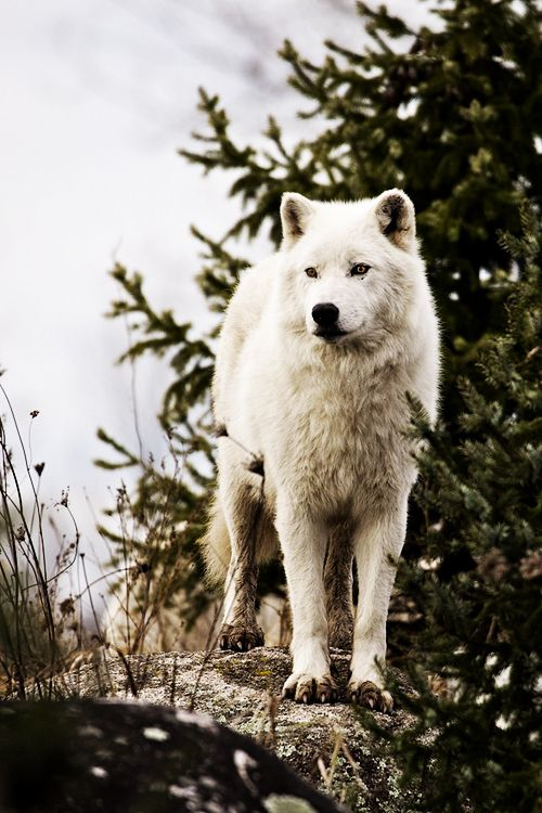((Open RP I'm the wolf in the pin, be the wolf that found me. Any gender.)) - I sigh as I continue to walk down the dirt path, I watch birds fly in the sky until I heard something behind me. I turn around to see another wolf, I growl at them. -