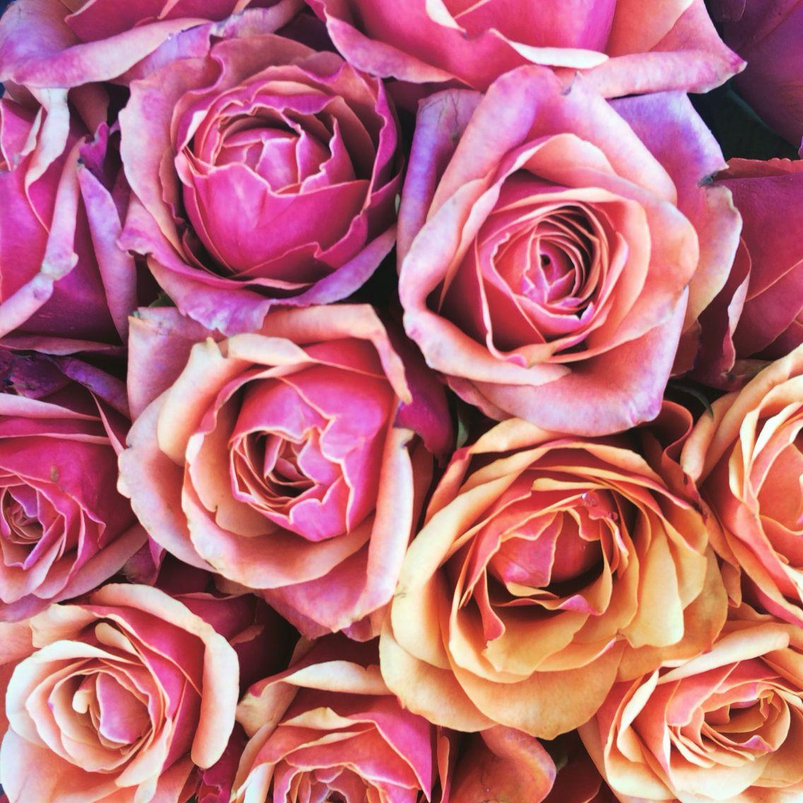 Flowers Flower Roses Rose Wien Vienna Beauty Pink
