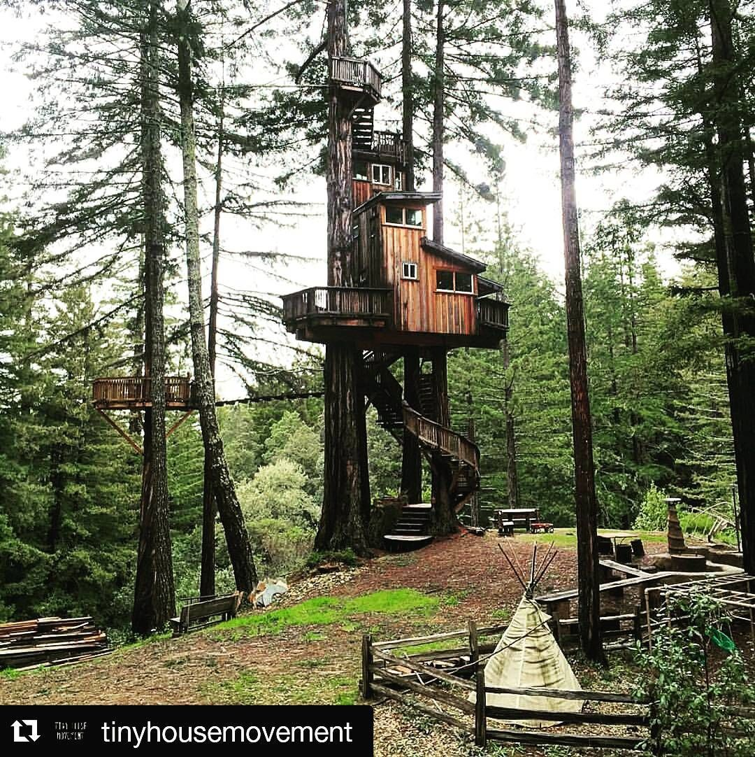 Cabane Sur Un Tronc D Arbre repost @tinyhousemovement if you like #beautiful tree houses