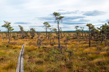 Store Mosse National Park. Photo: Henrik Karlsson/IBL, Sture Traneving
