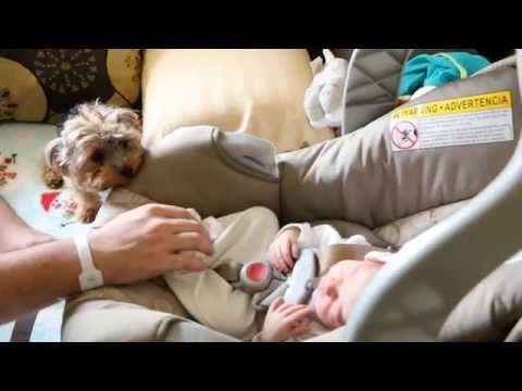 Dog Meets Baby For The First Time Newborn Baby Malaya Is About To