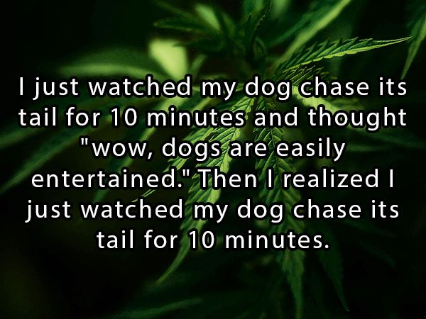 Highdeas are just shower thoughts for stoners (25 Photos ...