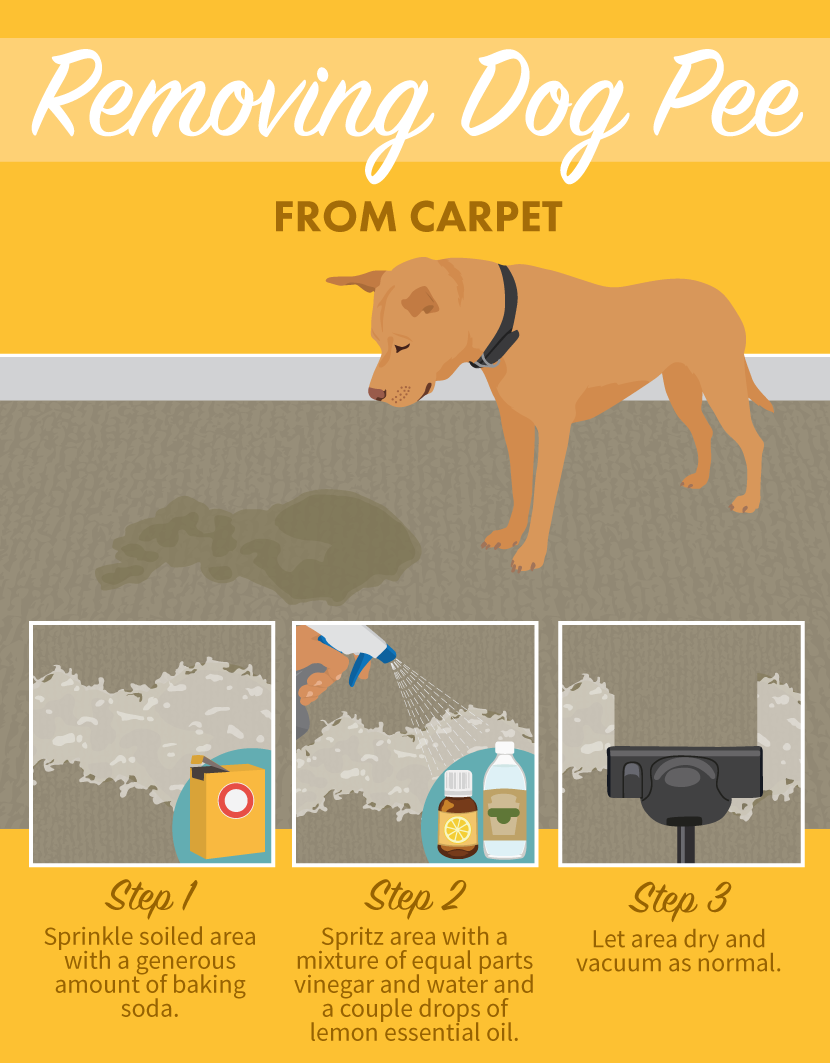 How To Clean Dog Urine From Carpet Naturally
