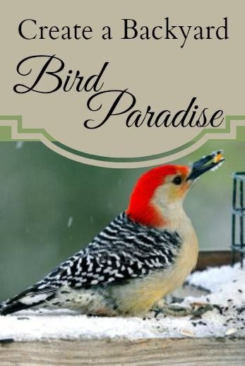 You can build the ultimate bird-friendly yard to feed year-round avian visitors, plus any unexpected guests who layover during a storm.