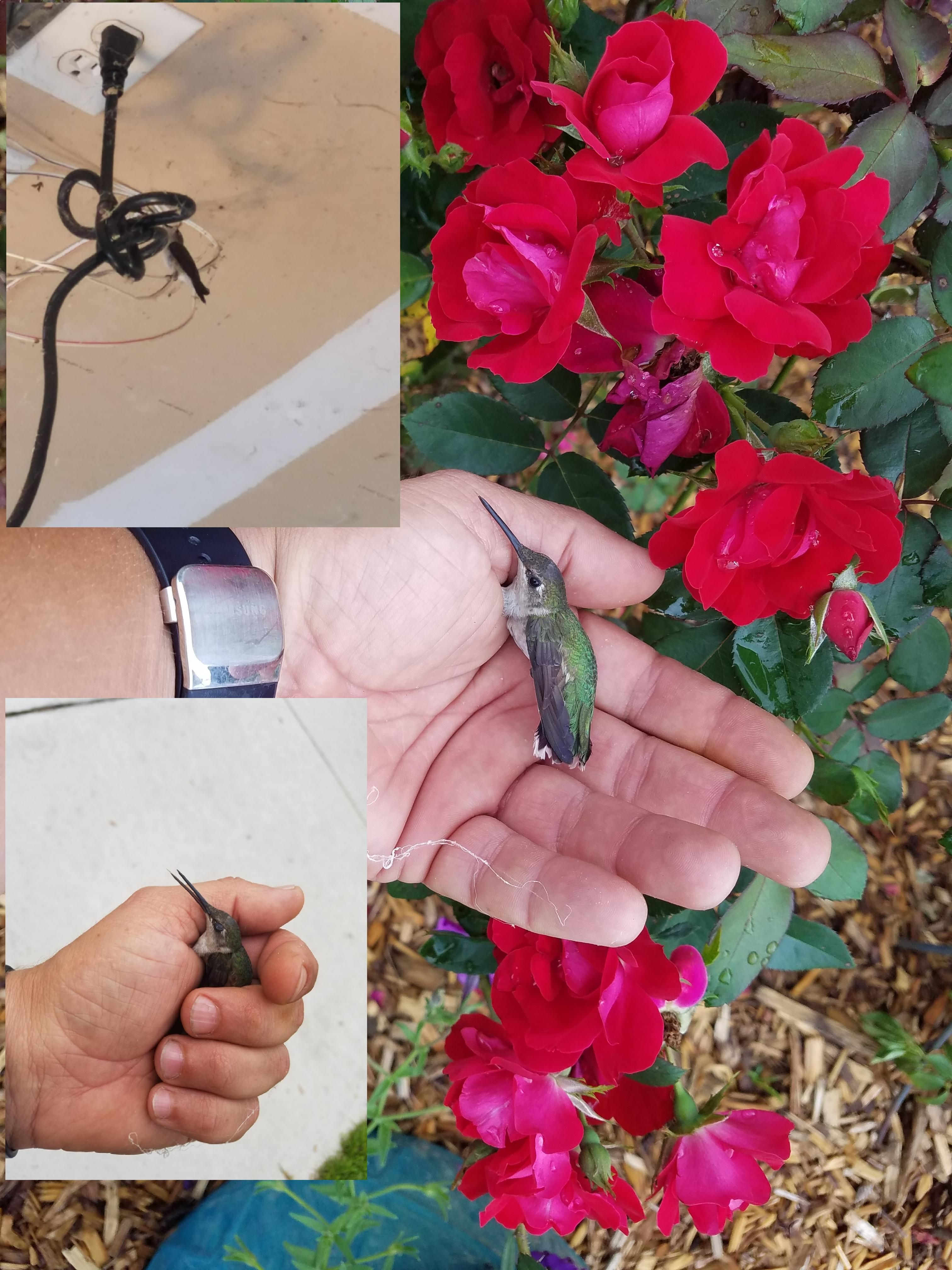 A hummingbird flew in my garage and couldn't get out. So I did a little catch and release. http://ift.tt/2r452BH