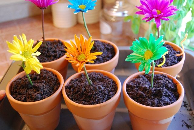 I was thinking one big pot but maybe lots of small pots would be cute too. This is also a slightly different recipe. Flower Pot Dessert (Ice Cream ... & Springy Flower Pot Desserts | Recipe | Future birthday party ideas ...