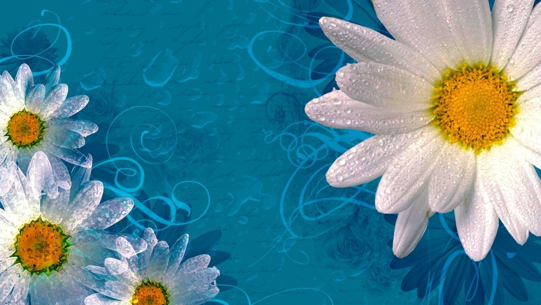 Dew on Purple Daisy Wallpaper iPhone, Android & Desktop