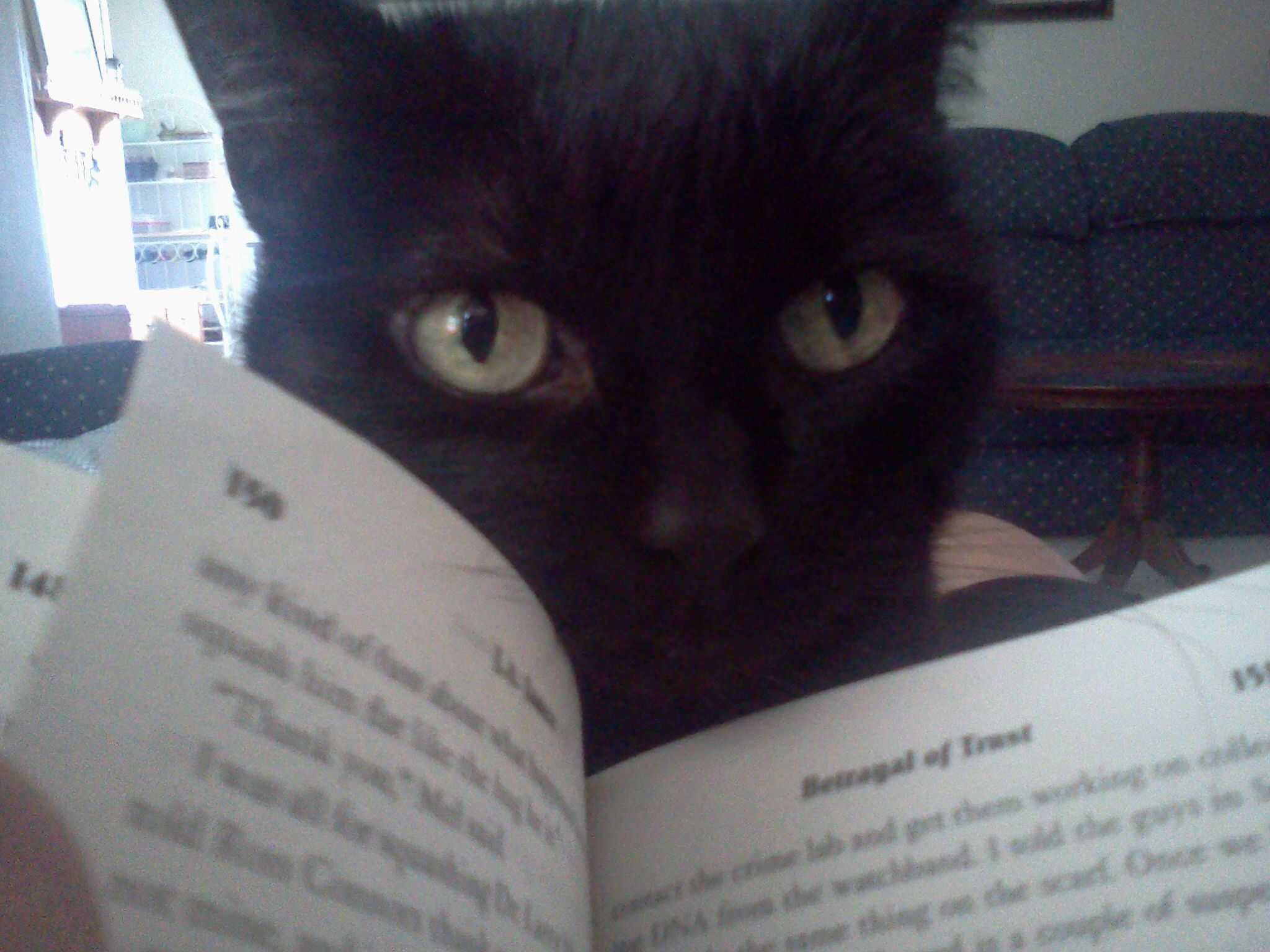 You want to read? Feed me first! Black Cat Cats, Animals