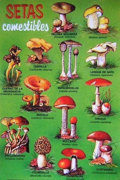 Tipos de hongos comestibles