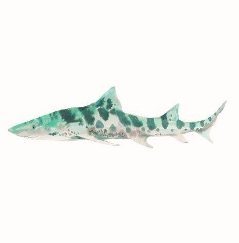 source : outblush.com  _  collection image illustration dessin drawing peinture aquarelle maritime, poisson requin (shark fish)