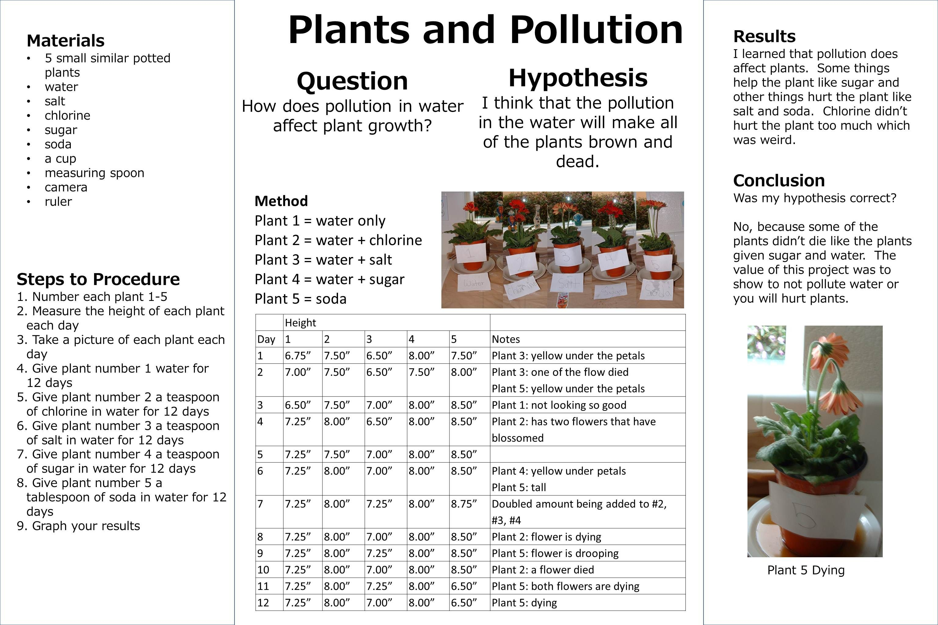 Plants And Pollution Science Fair Board