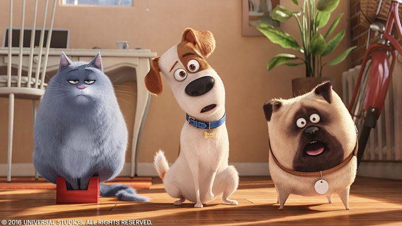 The Secret Life Of Pets Secret Life Of Pets Pets Movie Secret Life