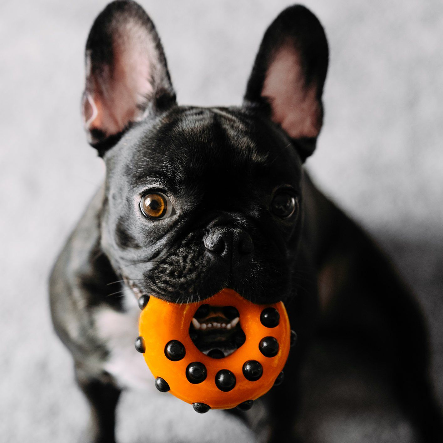 12 Indestructible Dog Toys Even the Toughest Fido Can't