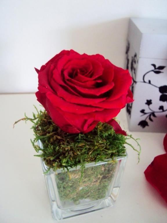 fleurs naturelles stabilis es c 39 est tellement simple de. Black Bedroom Furniture Sets. Home Design Ideas
