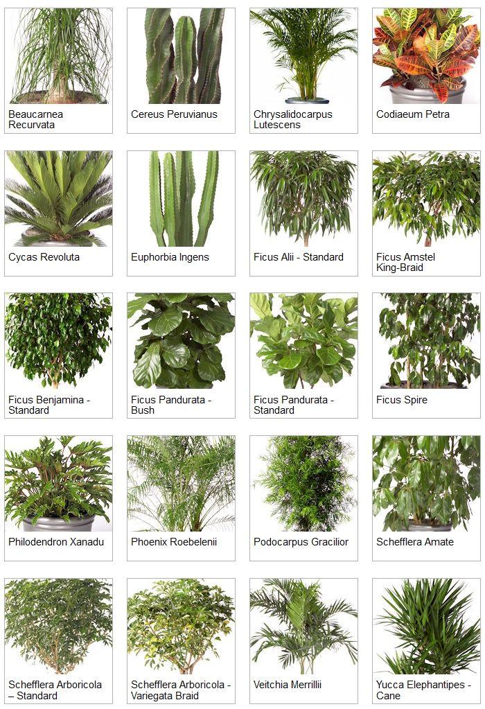 Indoor Palms Identification Indoor Tropical Plants