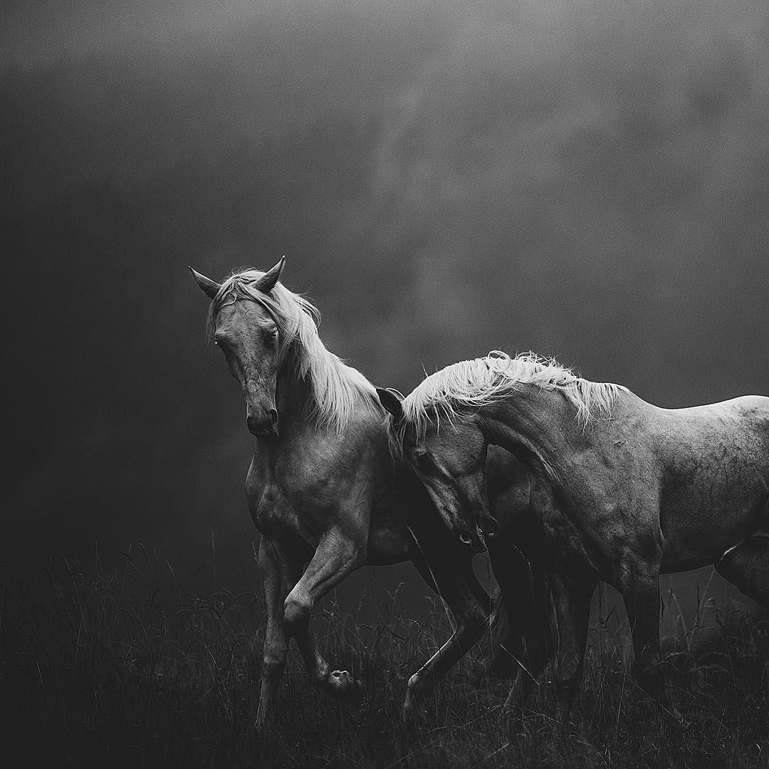 Dramatic black and white horse photograph
