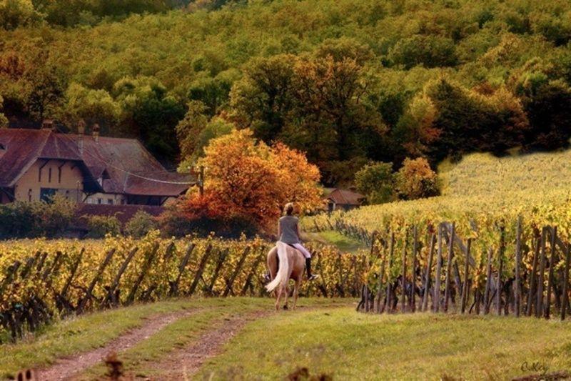 Sonoma Horseback Ride & Wine Tasting   San Francisco