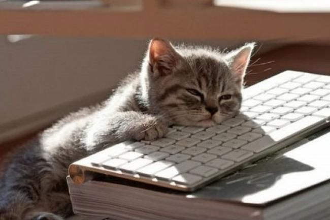Kitten With Its Head On A Keyboard Cute Animal Photos Funny
