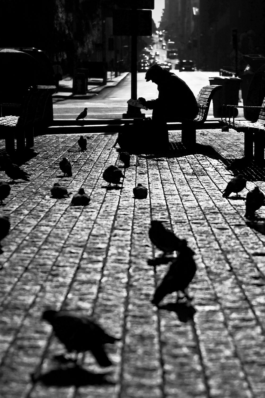 story time with the birds, 2012 by Diana K. Garrett