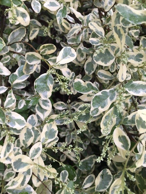 Free Plant Identification myGardenAnswers Plants
