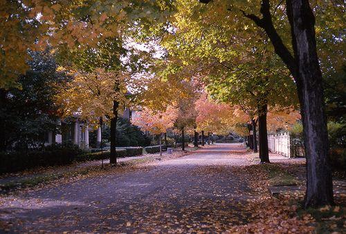 Autumn in Brookline, 1965