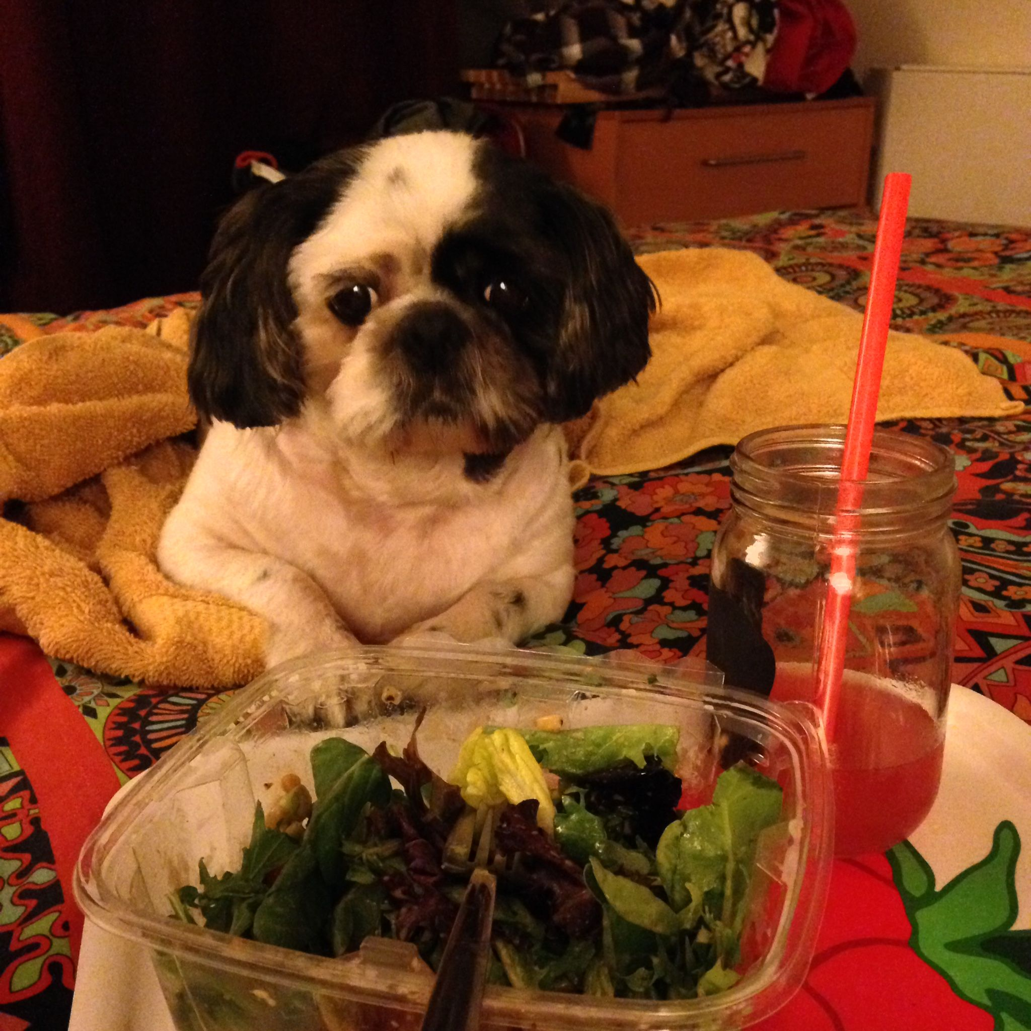 Passes on salads with images shih tzu dog shih tzus