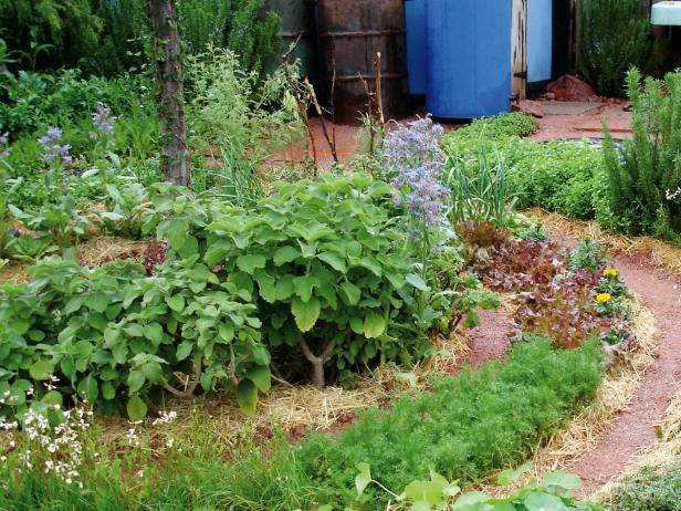 Combining Vegetables And Flowers In Your Garden Diy ProjectsEdible