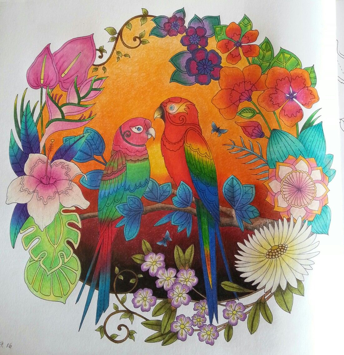 Watercolor pencils for adult coloring book - Johanna Basford Magical Jungle Watercolor Pencilswatercolorsadult Coloringcoloring Bookscolor