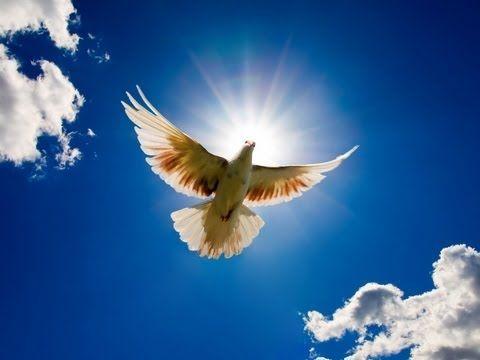 Blowin In The Wind Bob Dylan Youtube Beautiful Birds Bird Pictures Dove Bird