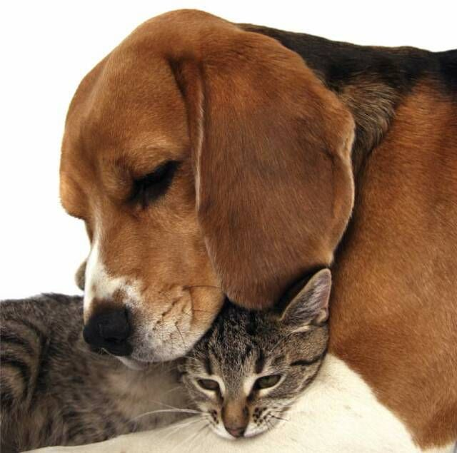 dog and cat pictures together | dog_and_cat_together.jpg ...