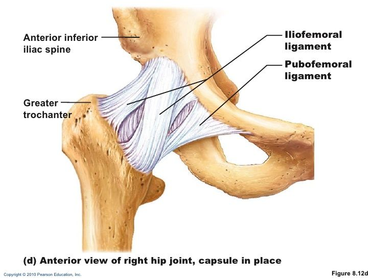 iliofemoral ligament - Google Search | Anatomy | Pinterest