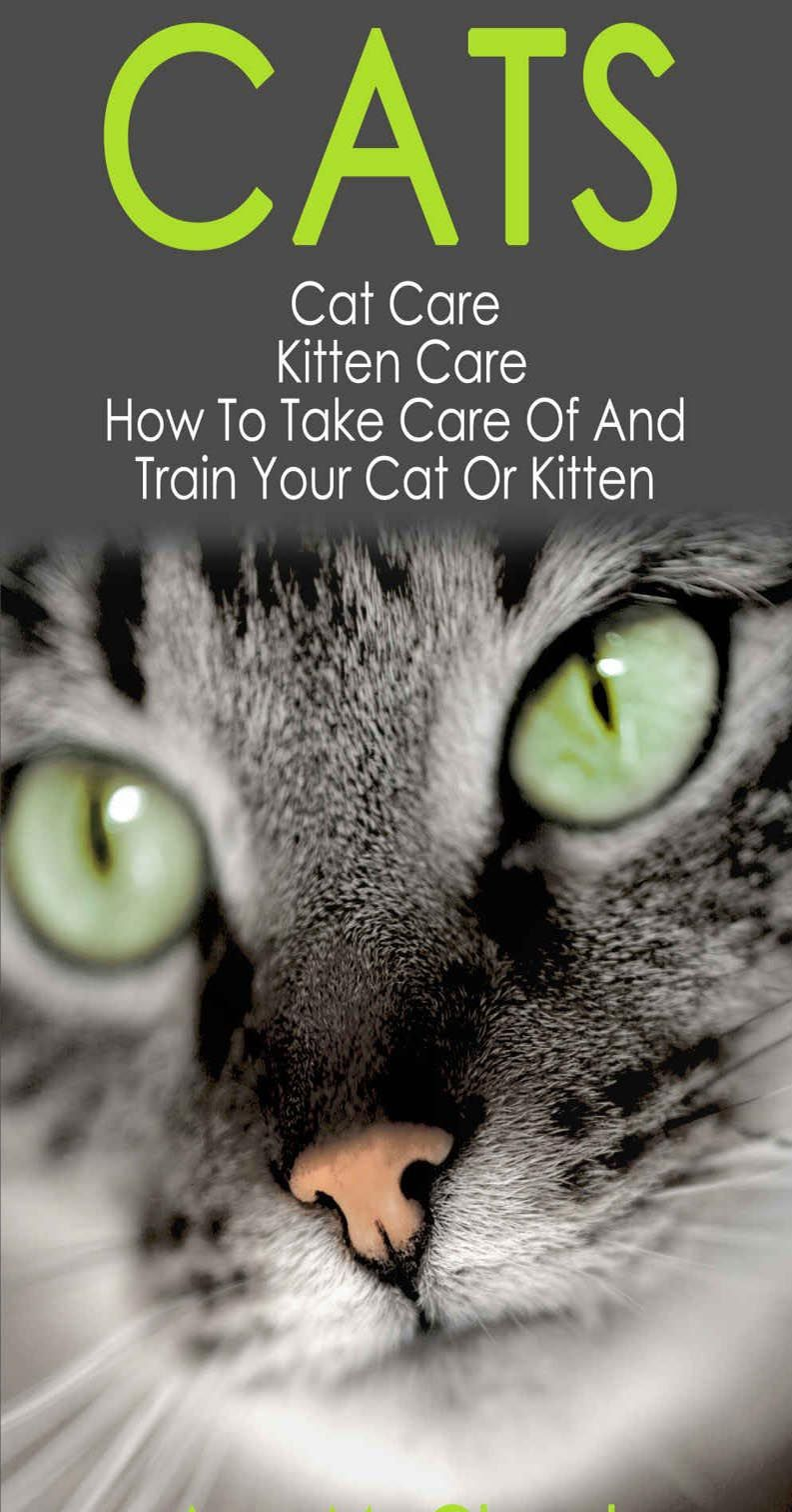 4 Tips For Grooming Your Cat At Home Cat Guides Kitten Care Cat Care Cat Advice