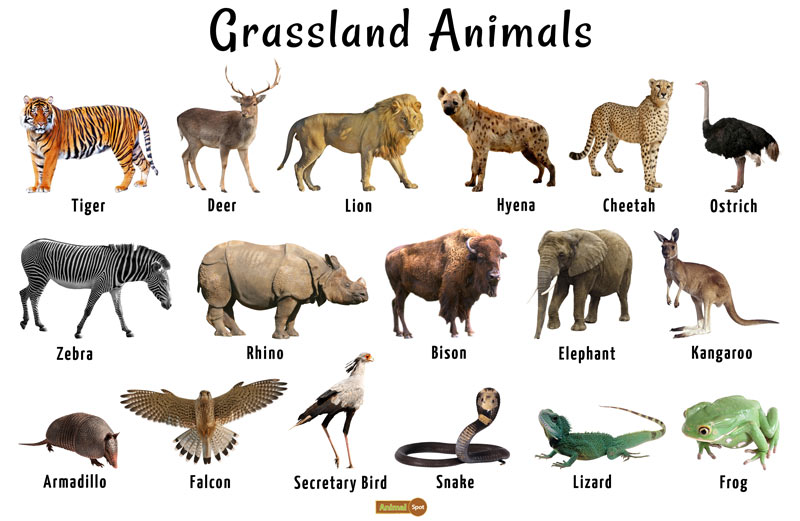 animals found in grassland habitat of south africa